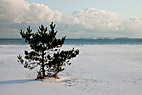 Snelandskab - Lonely tree on a snow covered beach